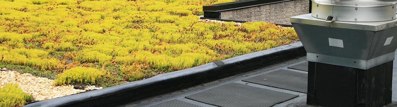 Les avantages d'une toiture végétalisée