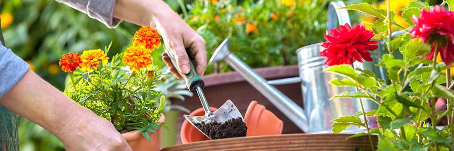 Conception, réalisation et entretien des jardins