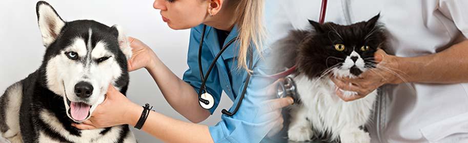 La médecine générale pour les félins et les canins