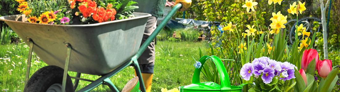 votre référence en élagage et entretien de jardin