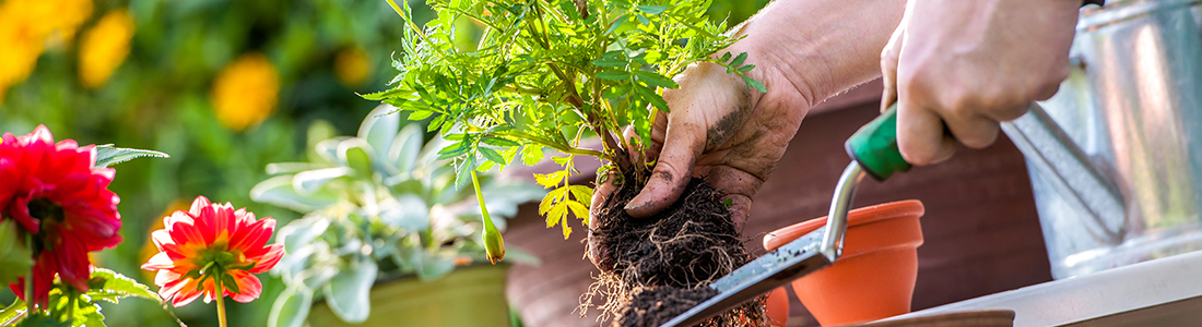Sarclage des végétations nuisibles aux jardins