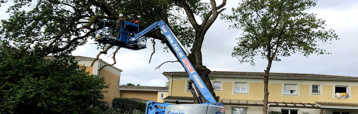 L'abattage d'arbre