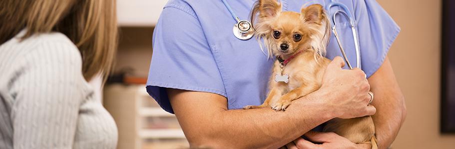 La consultation vétérinaire préventive