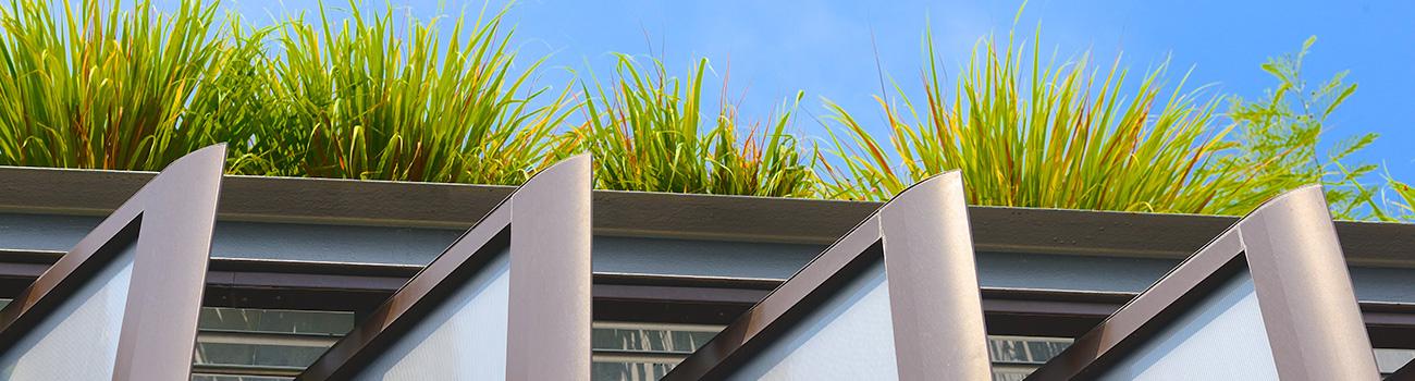 Végétalisation de toiture – Artisan couvreur à Lyon