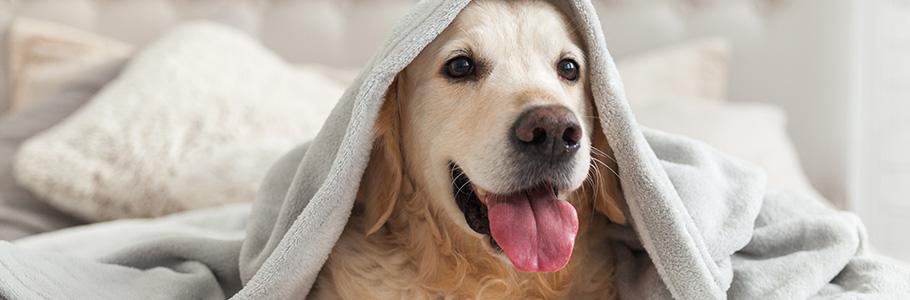 Ostéopathe canin à Lisieux – Aurore Defienne