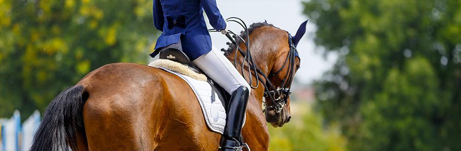L'ostéopathie durant la vie du cheval