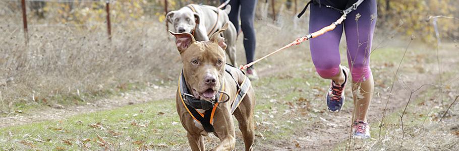 L'ostéopathie durant la vie du chien
