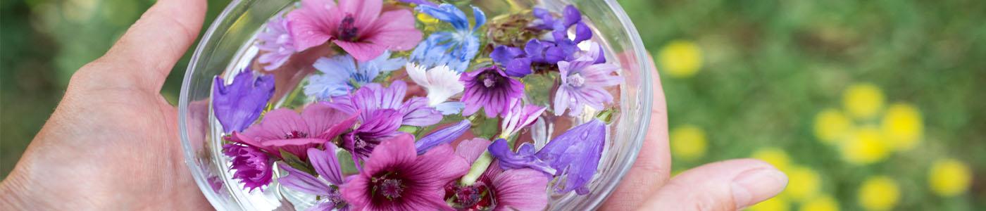 La thérapie par les Elixirs floraux – Psychologue à Souffelweyersheim
