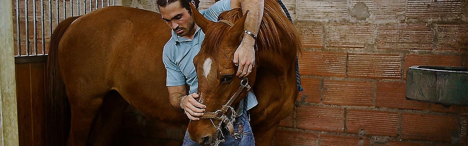 Ostéopathie pour cheval à Franqueville
