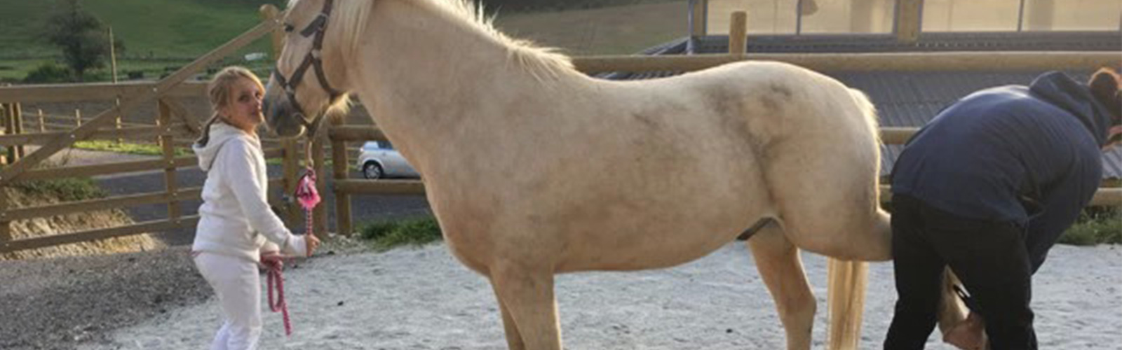 Le suivi sportif du cheval