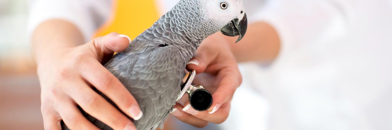 Une vétérinaire pour le soin des animaux à poils, plumes ou écailles