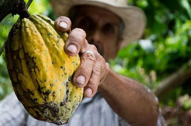 Les bienfaits du cacao sur notre santé