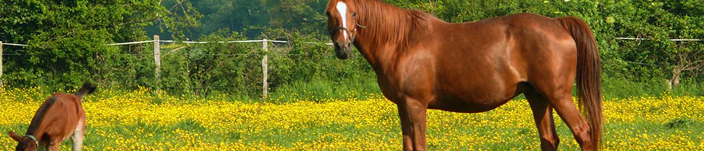 Une location idéale pour partir en vacances avec son cheval