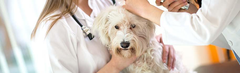La consultation vétérinaire pour les chiens et chats