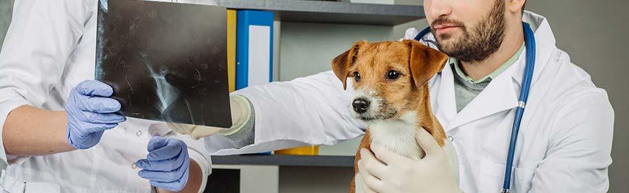 L'échographie et la radiologie pour les chiens et les chats
