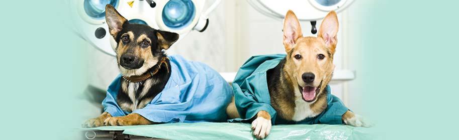 La stérilisation pour les chiens et les chats