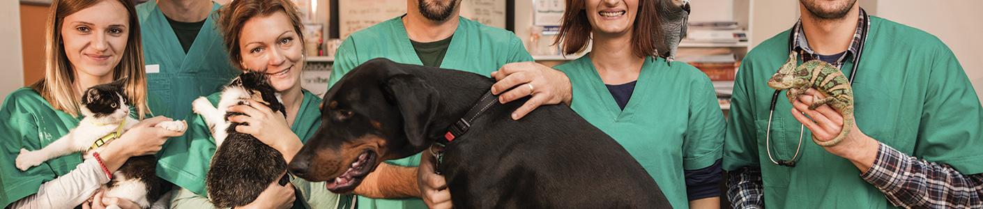 Clinique vétérinaire chien, chat et NAC – Chantilly & Viarmes