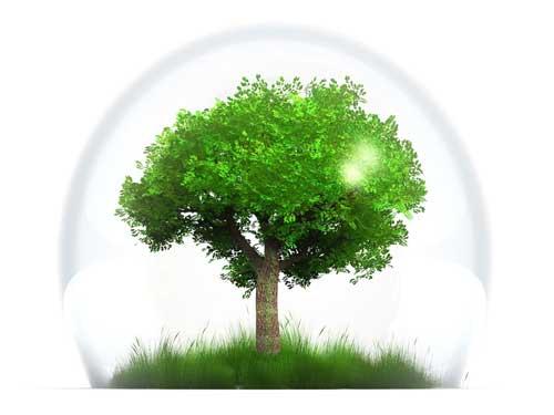 arbre-naturopathe