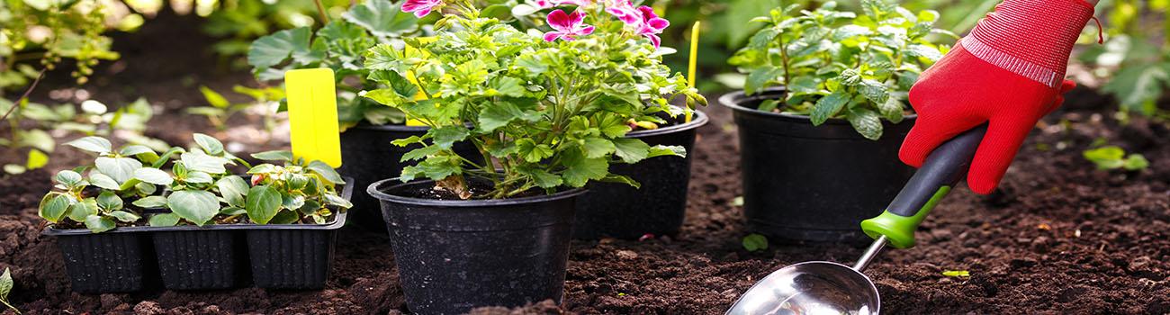 L'entretien des plantes et arbustes