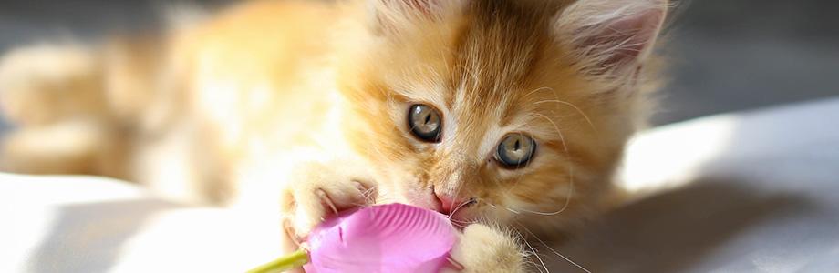 Des vétérinaires aux petits soins pour votre chien, chat et NAC