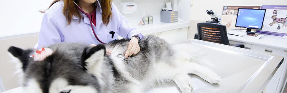 Cabinet vétérinaire à Jeumont – Urgences vétérinaires