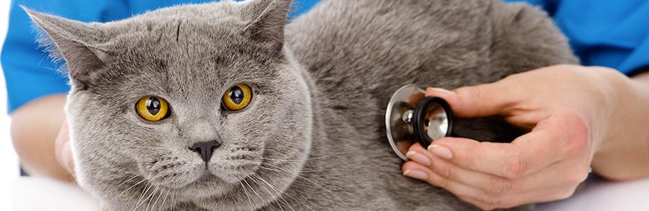 Chirurgie vétérinaire à Jeumont - Cabinet vétérinaire Cabvet