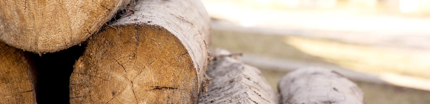 Vendeur de bois de qualité
