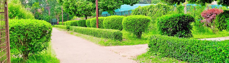 Conception d'espaces verts