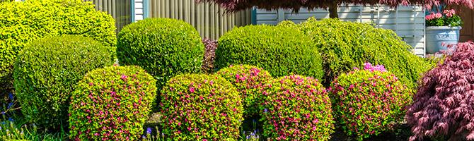 Élagage, abattage et entretien de jardins