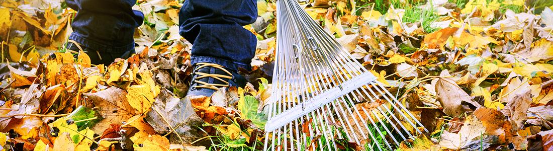 Votre jardinier pro pour l'abattage d'arbres à Montreuil