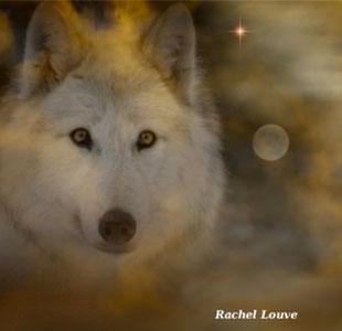 Cercles Mixtes « Le chemin du loup blanc »